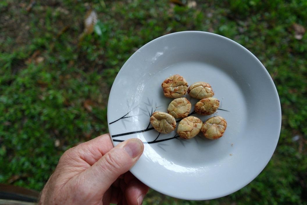 31 Chichua Patas of Cacao Blanco, licht gezouten grote platte witte soort van bonen, vers gebakken door Ana