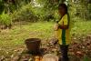 17 vruchtvlees rondom een bundel cacaobonen
