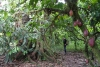 25 prachtige route door het regenwoud