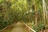 19 prachtig paden in het Archeologisch park San Agustin, Werelderfgoed cultuur