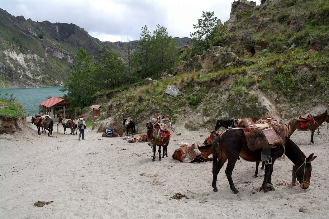 26 aan de voet van het vulkanische kratermeer, staan de paarden al gereed voor de tocht terug naar boven voor de liefhebbers