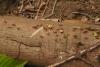 10 mieren eeuwig en zwaar beladen onderweg