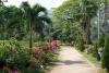 41 in de dorpjes in omgeving van het park Tayrona zijn enkele prachtige bloemen tuinen en boomkwekerijen