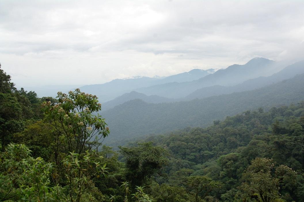 09 prachtige uitzichten, vanuit de Andes gaat de vegetatie geleidelijk over een tropisch plantendek, het Amazone gebied