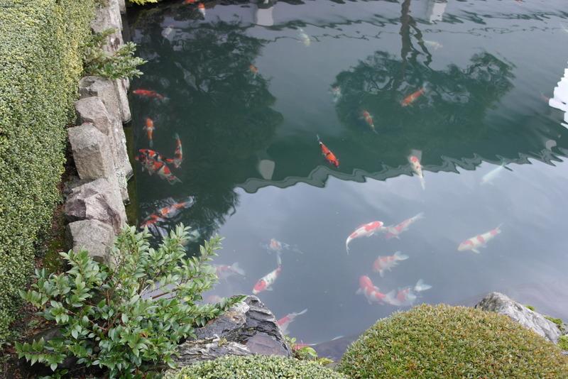 06-met-prachtige-vissen