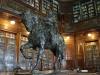 14 De Bibliotheek, als middelpunt de bronzen beeltenis van Artigas te paard, gezien als de vader en grondlegger van Uruguay