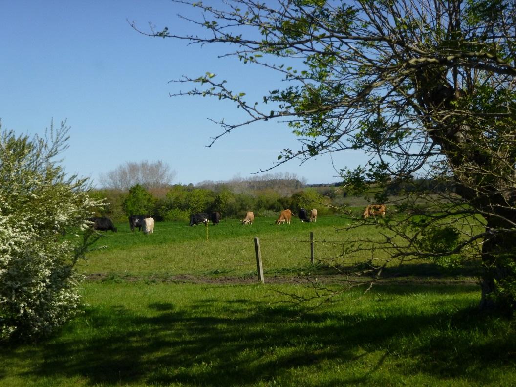 08 hun 17 koeien, leveren ca 300 liter per dag (18 ha)
