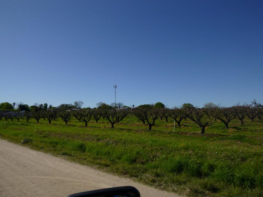 13 gebied met veel fruitbomen