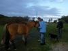 02 Bij aankomst krijgen eerst zijn beide paarden wat extra