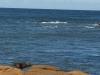 24  de eerste zeehond in beeld