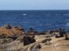 30 met enkele grote zeeleeuwen