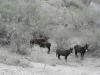 Dit groepje ezels steekt ineens sterk af bij het door stof getekende landschap