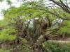02 overweldigende bomen en begroeiing op route 9 naar district de Jujuy