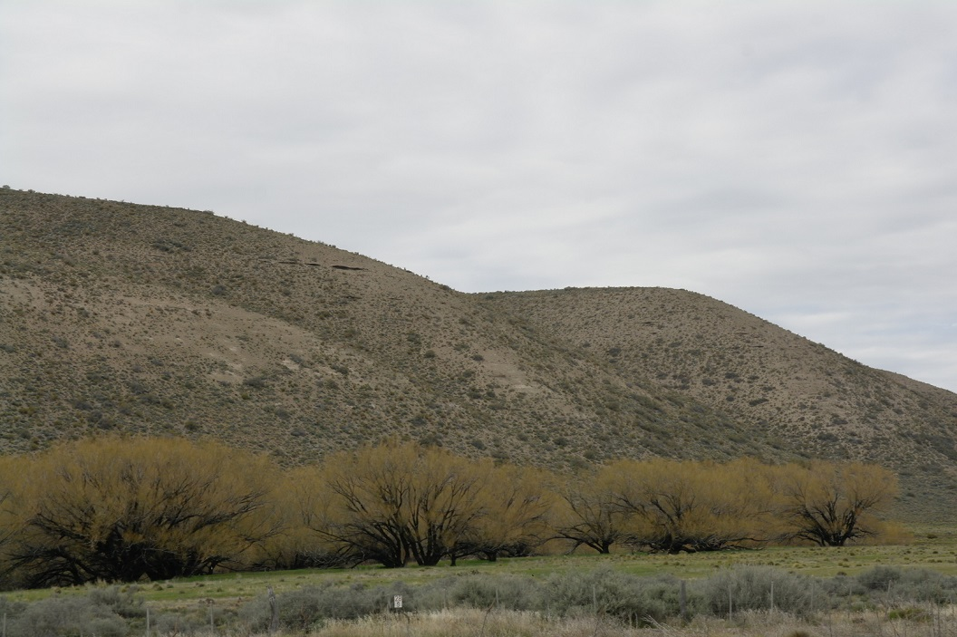 12 bomen, getekend in de vallei met pril voorjaarsgroen