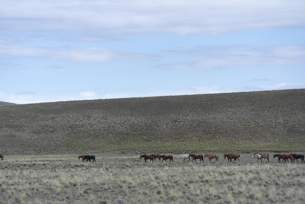 Paarden in de open vallei