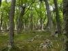 12 en door dit bijzondere bemoste bos