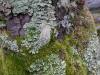 14 kleuren palet van mos
