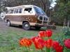 21 verrast door uitbundig voorjaar, tulpen