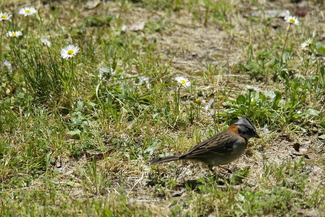 18  weide met madeliefjes en nieuwsgierige vogeltjes