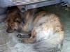 12 Coraje hun hond en trouwe vriend wacht rustig af