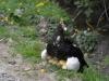 11 prachtig onder moeders vleugels, moeder eend met haar 6 jonge eendjes