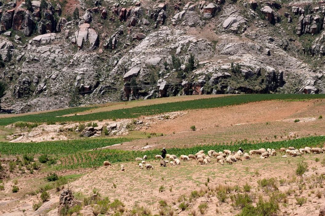 05 onderweg, regelmatig een herderin met haar kudde schapen. De verzorging van dieren voornamelijk door vrouwen