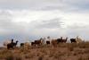 44 we gaan weer op weg, op weg naar Potosi en komen ze telkens weer tegen, Lama en Alpaca