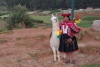 14 bewoner in haar authentieke Inca klederdracht samen met haar lama. De Inca's waren een indianenvolk dat vanaf de dertiende eeuw leefde in een gebied rondom hun hoofdstad Cuzco in het huidige Peru