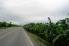 36 gebied met vele bananen plantage's