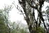 18 prachtige natuur - Cloud-Forrest nabij Parque Nacional Los Quetzales SAM_4694