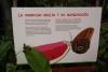02 entree in de vlindertuin - Jardin de Mariposas SAM_4725
