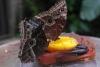 05 lokplaatje in de vlindertuin - Jardin de Mariposas SAM_4798
