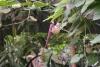06 prachtige bloemen in de Jardin de Mariposas SAM_4727