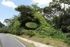 04 Route 32 via Siquirres op weg naar Parismina SAM_5031