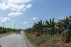 06 onderweg uitgestrekte bananen plantages SAM_5051