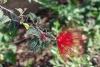 10 prachtige bloeiwijze SAM_5592