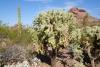 11 geen cactus dezelfde SAM_5598