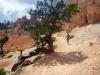 16 indrukwekkende vormen - natuur Bryce Canyon - wandeling Fairyland trail P1020360