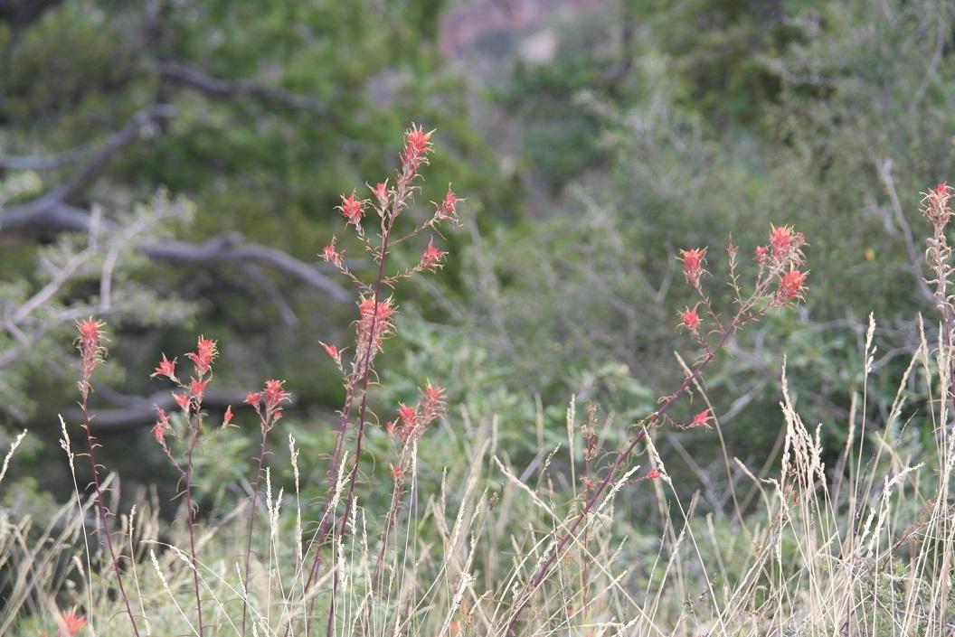 20 prachtige vegetatie SAM_3413