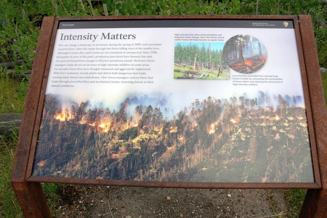 40 bosbranden creeeren ook weer nieuw leven SAM_6397