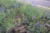 44 prachtige vegetatie SAM_6405