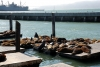 13 Pier 39 San Francisco - luieren in de zon SAM_7715