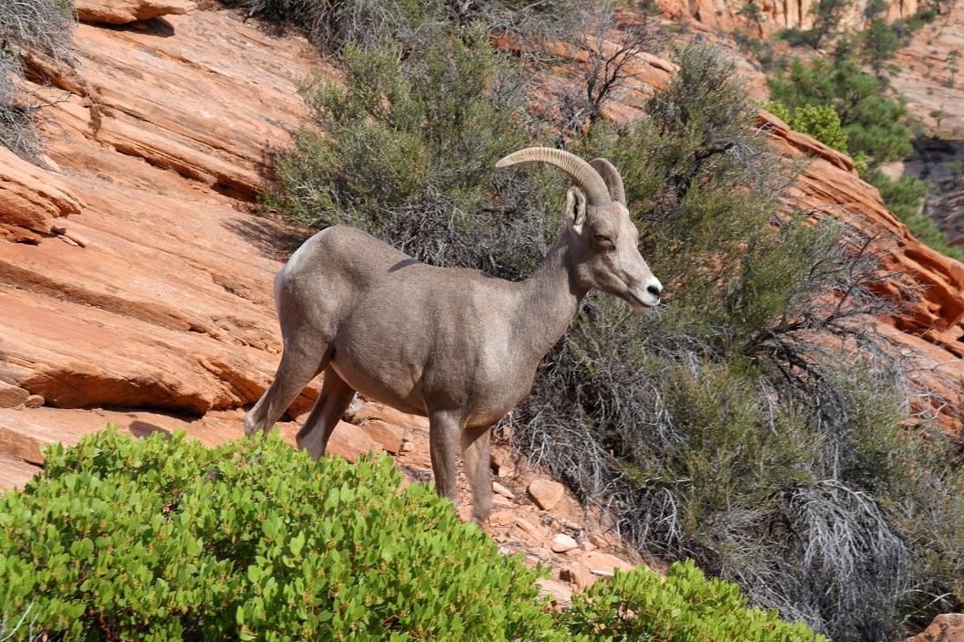 44 in de natuur van Zion National Park SAM_6894