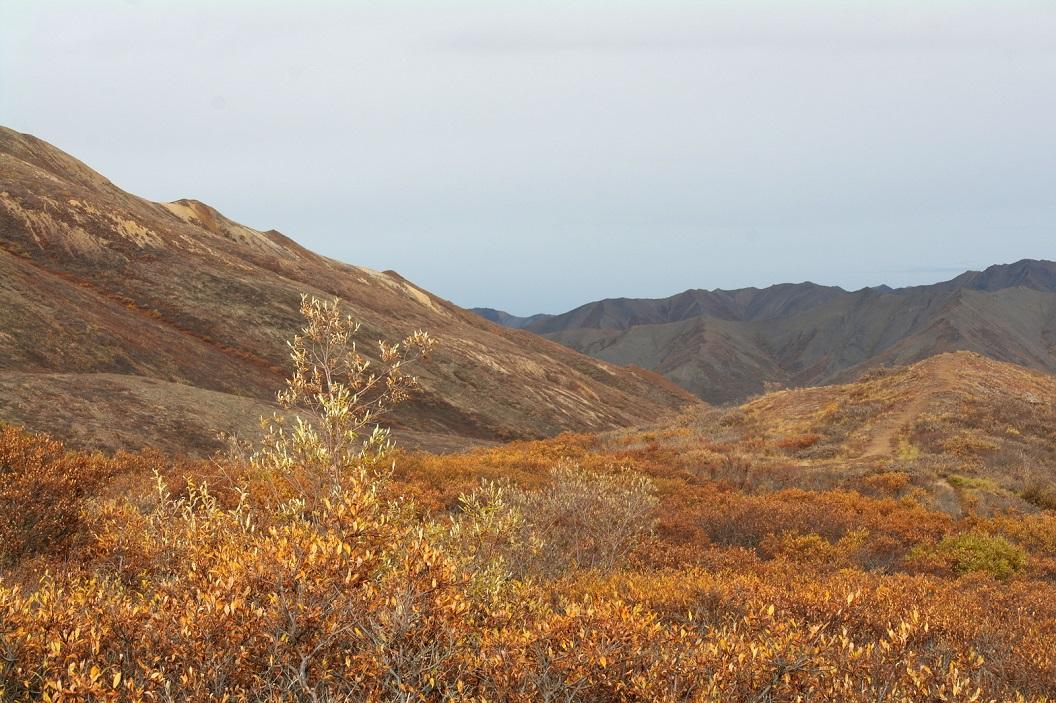 07 Denali National Park SAM_1133