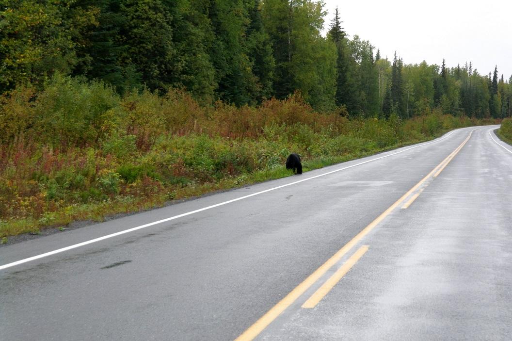 02 stop! onze éérste zwarte beer op deze Route 37 SAM_0444
