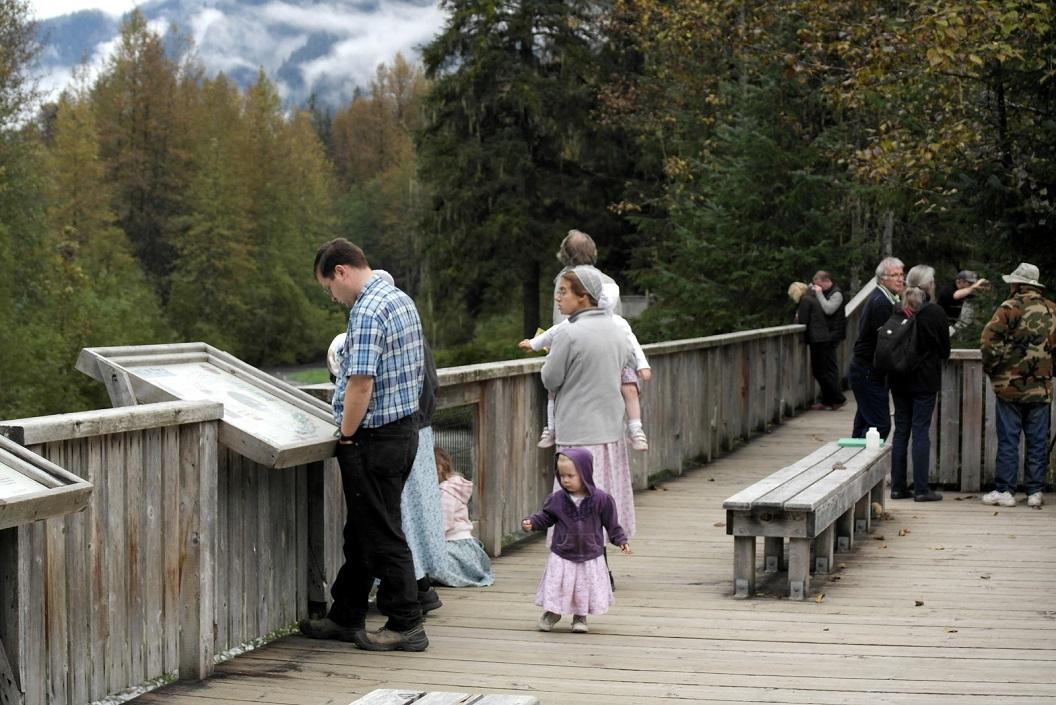 25 vele bezoekers op beveiligde voetpaden boven de beek waar de zalm haar eieren legt en waar tevens de zwarte beer graag komt ! SAM_0438