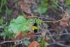 17 ... hier komt ooit eens een vlinder van! SAM_0488