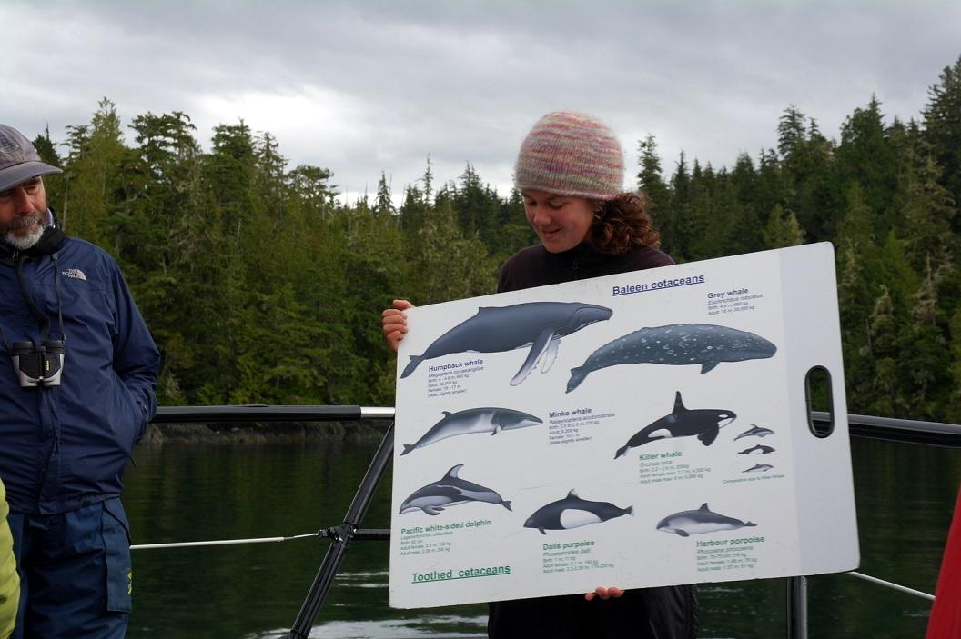27 uitleg ... de Orka - ook wel Killer Whales genoemd - is de grootste vertegenwoordiger van de familie Dolfijnen SAM_0075