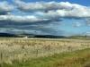 25-schapenvelden-en-vergezichten