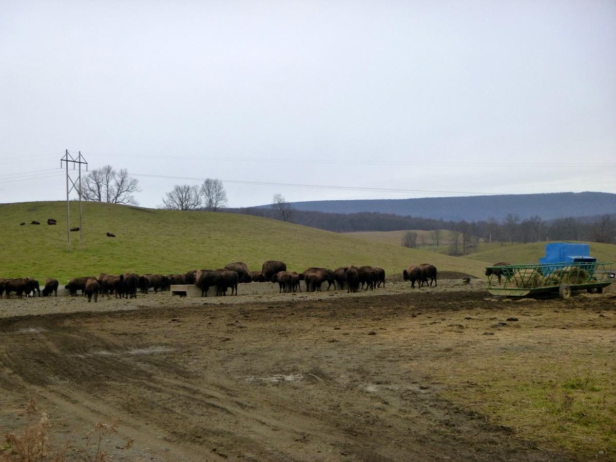 10 de Bison Corral Farm aan de Lincoln Highway